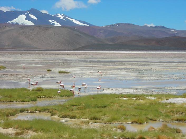 Laguna de los Aparejos Pissis Atacama